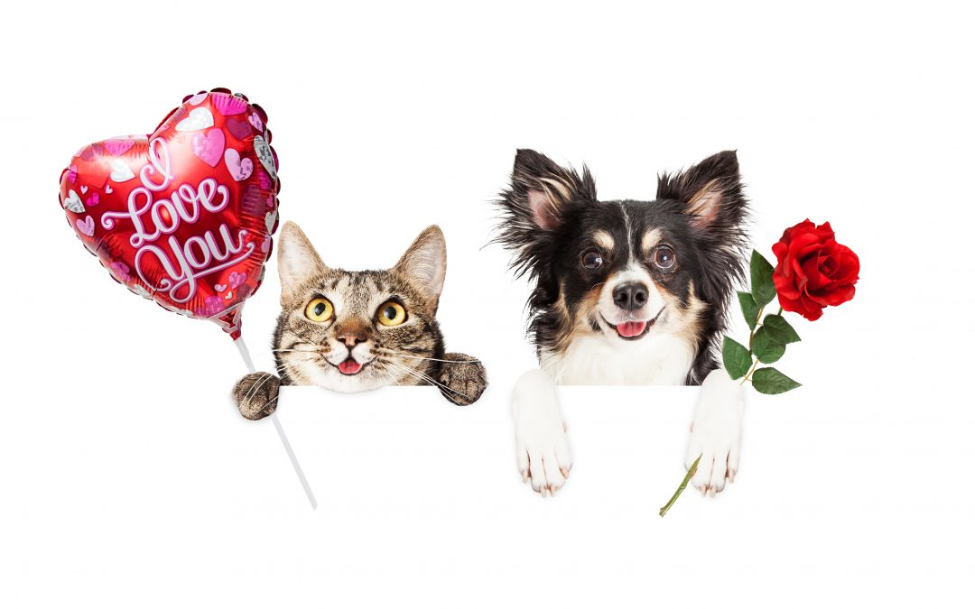 How to Keep Your Pets Safe on Valentine's Day: This Day of Love Can be Dangerous for Dogs, Cats, and Other Pets